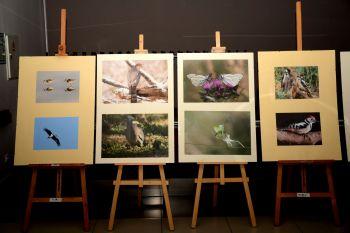 Miniatura zdjęcia: Za moim płotem - fot6